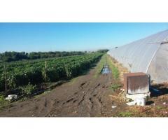 Privato terreno coltivabile mq 4200 Euro 30