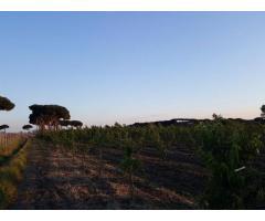 Terreno Agricolo in Vendita a Giugliano in Campania di 1 mq