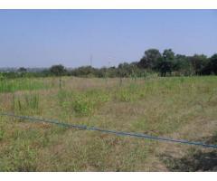 Vendita Agricolo in Via Campana