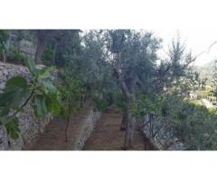 Vendita Agricolo in Via Alberi