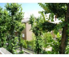 rif: APC14716 - Appartamento in Vendita a Piacenza
