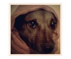 assistenza animali domestici pet sitter