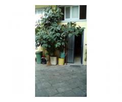 RifITI 027-SU935 - Magazzino in Affitto a Sant'Antimo di 50 mq