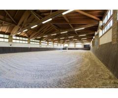 Centro ippico scuderia cavalli