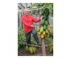 Compagna per giardino tropicale