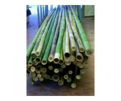 In vendita canne di bambù bambu con diametri da 1 a 10 cm. lunghezza da definire