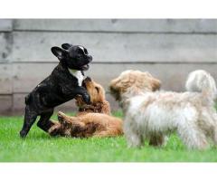 Dog sitter Pensione Casalinga e Asilo Giornaliero