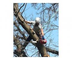 Treeclimbing ed abbattimenti controllati