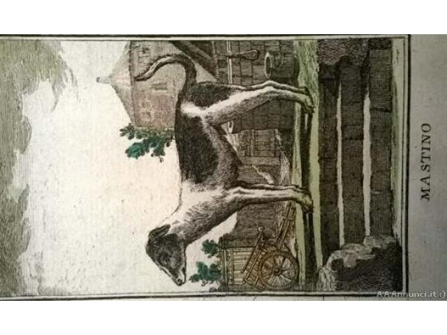 5 litografie originali del 700 - Venezia